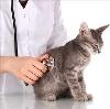 Ветеринарные клиники в Сухом Логе